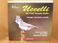 Uccelli-Ornitologia-Birdwatching